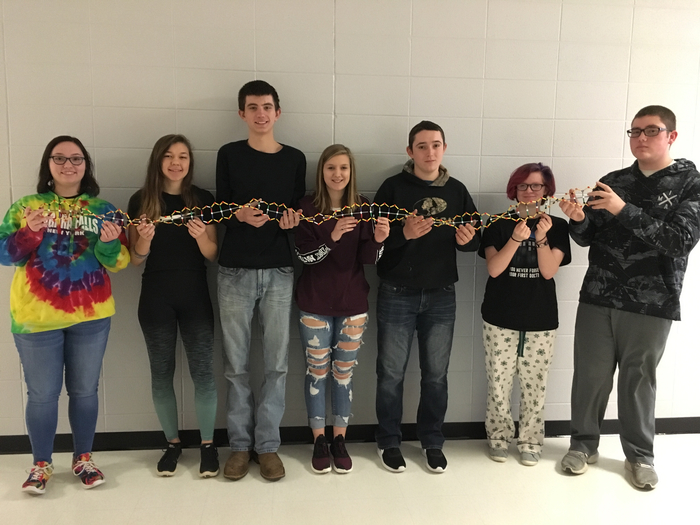 Students show an example of a DNA chain made in Biology.